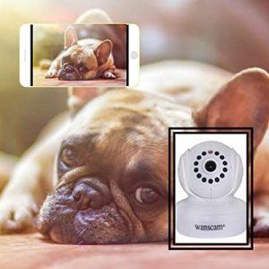 camera-de-surveillance-pour-chien