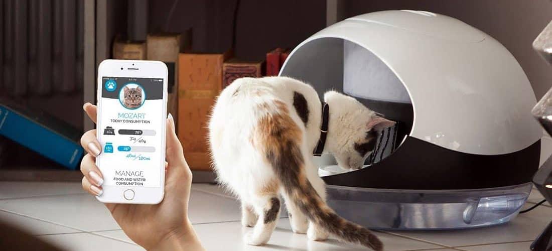 meilleur-distributeur-automatique-nourriture-chats-chiens